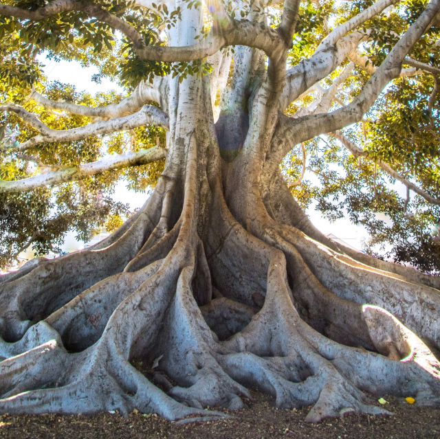 Hypnotherapy represented by a tree with deep roots